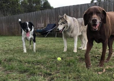 Dogs with balls at Dog Daycare near Hobart