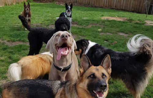 Dog daycare near Hobart