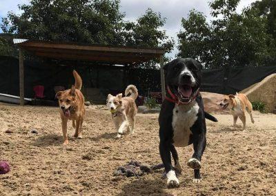 Fun social dog boarding near Hobart