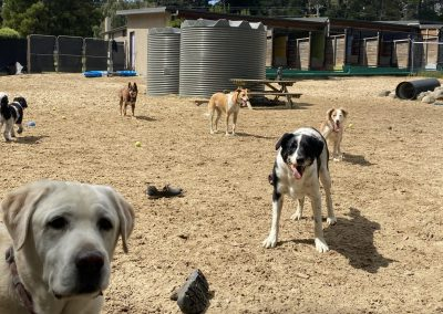 dogs drinking together at the Dog Resort