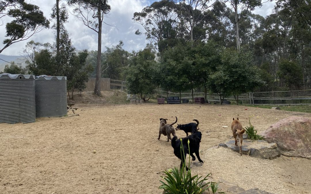 Dog Boarding Trial Night – Keeping the canine peace