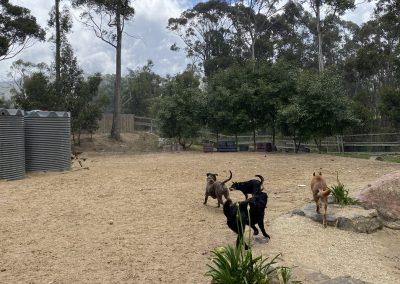 Fun and social dog daycare near Hobart