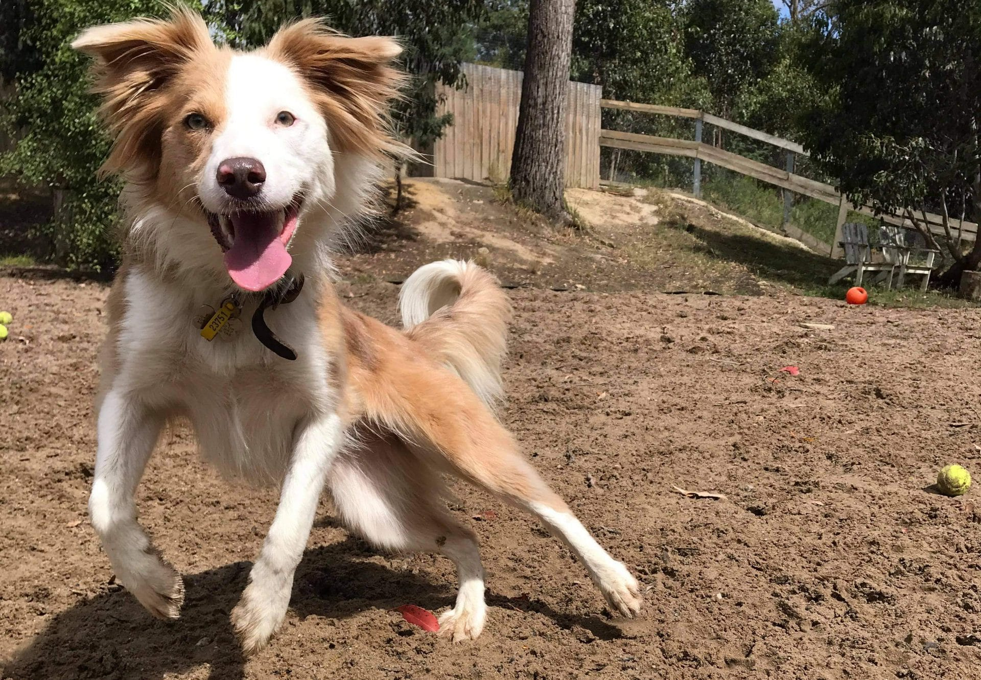 Dog boarding and dog day care in Hobart