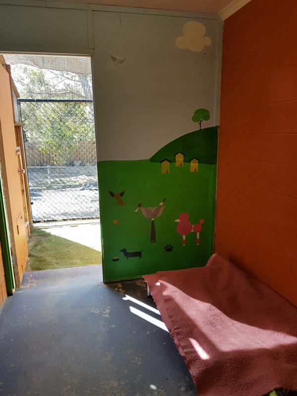 Comfortable room at dog daycare near Hobart